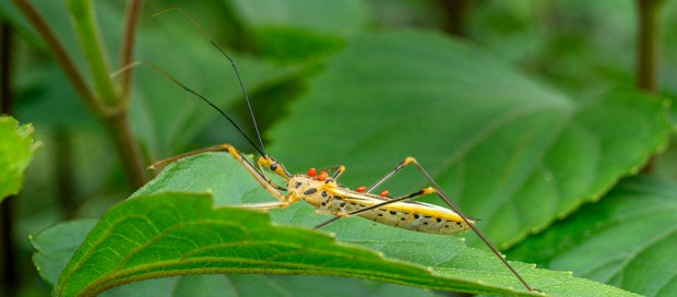 Assassin bug and mite