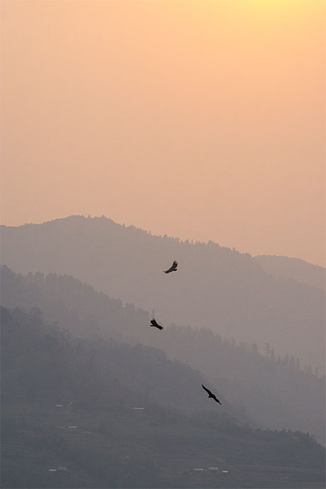 Vultures flying and sunset in Priti