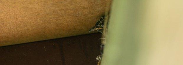 Cuckoo-nesting