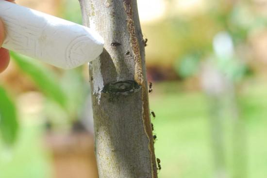 Mravce na svojej tradičnej cestičke