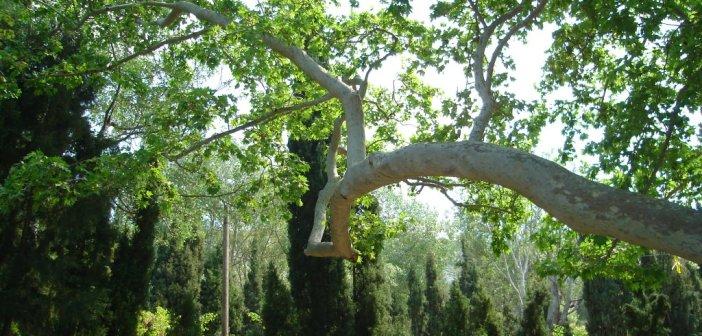 δασος Καισαριανης