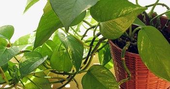 Πως φροντίζουμε τα φυτά εσωτερικού χώρου