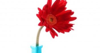 λουλουδια στο βαζο-φρεσκα