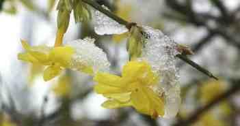 προστασία κήπου από το κρύο