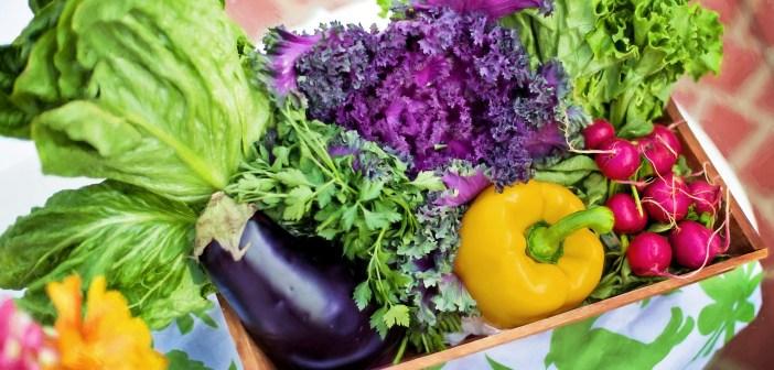 φύτεμα λαχανικών από σπόρους