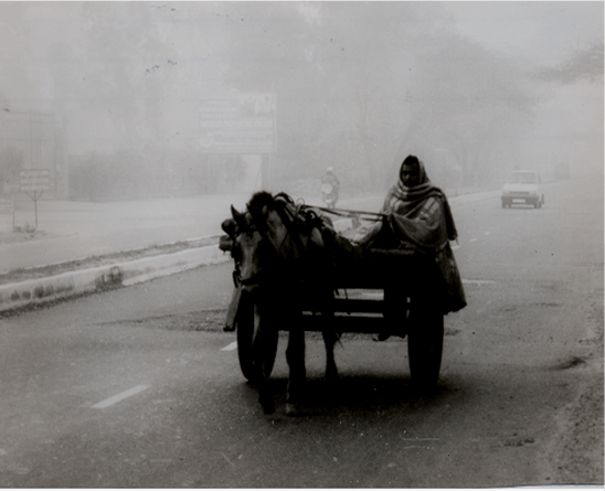horse-cart-in-delhi-winter-morning11