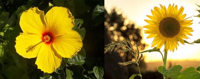 bunga monokotil dikotil, perbedaan Tumbuhan monokotil dan dikotil pada kelopak bunga