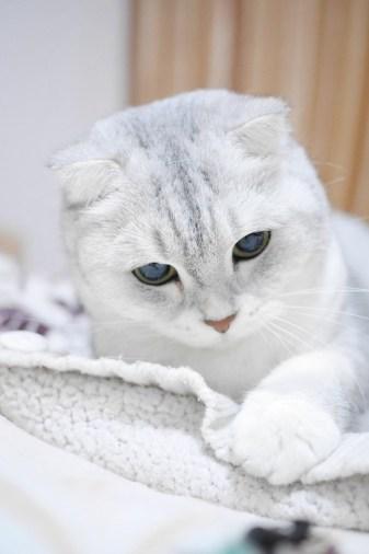 sifat kucing, kucing lucu, gambar kucing