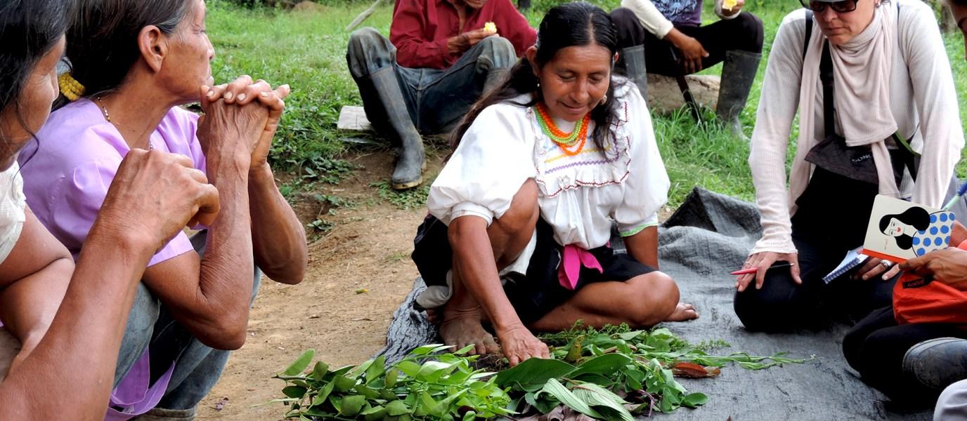 Editorial: Comunidades andino-amazónicas. Visiones culturales en tiempos de plagas