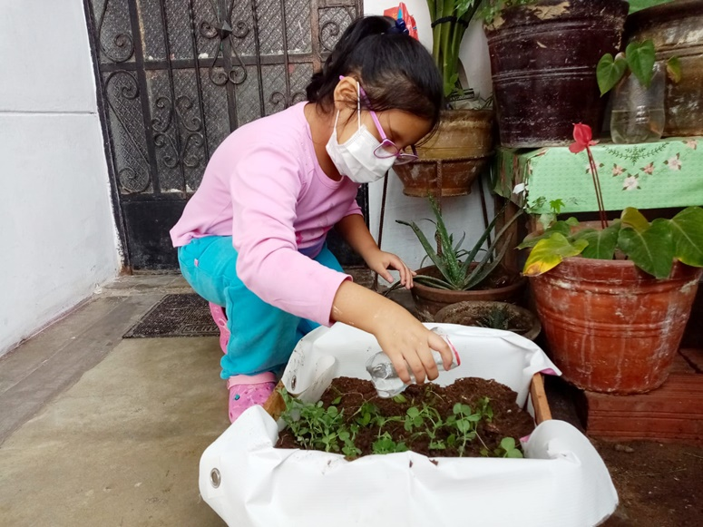 Villa El Salvador: Huertas familiares: alimento y cuidado de la salud desde el saber tradicional en tiempo de pandemia