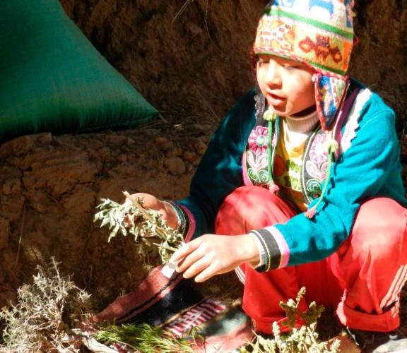 Bolivia: Qhoras nincheqwan onq'oyta jark'asun (Con nuestras plantas nos cuidamos de las enfermedades)