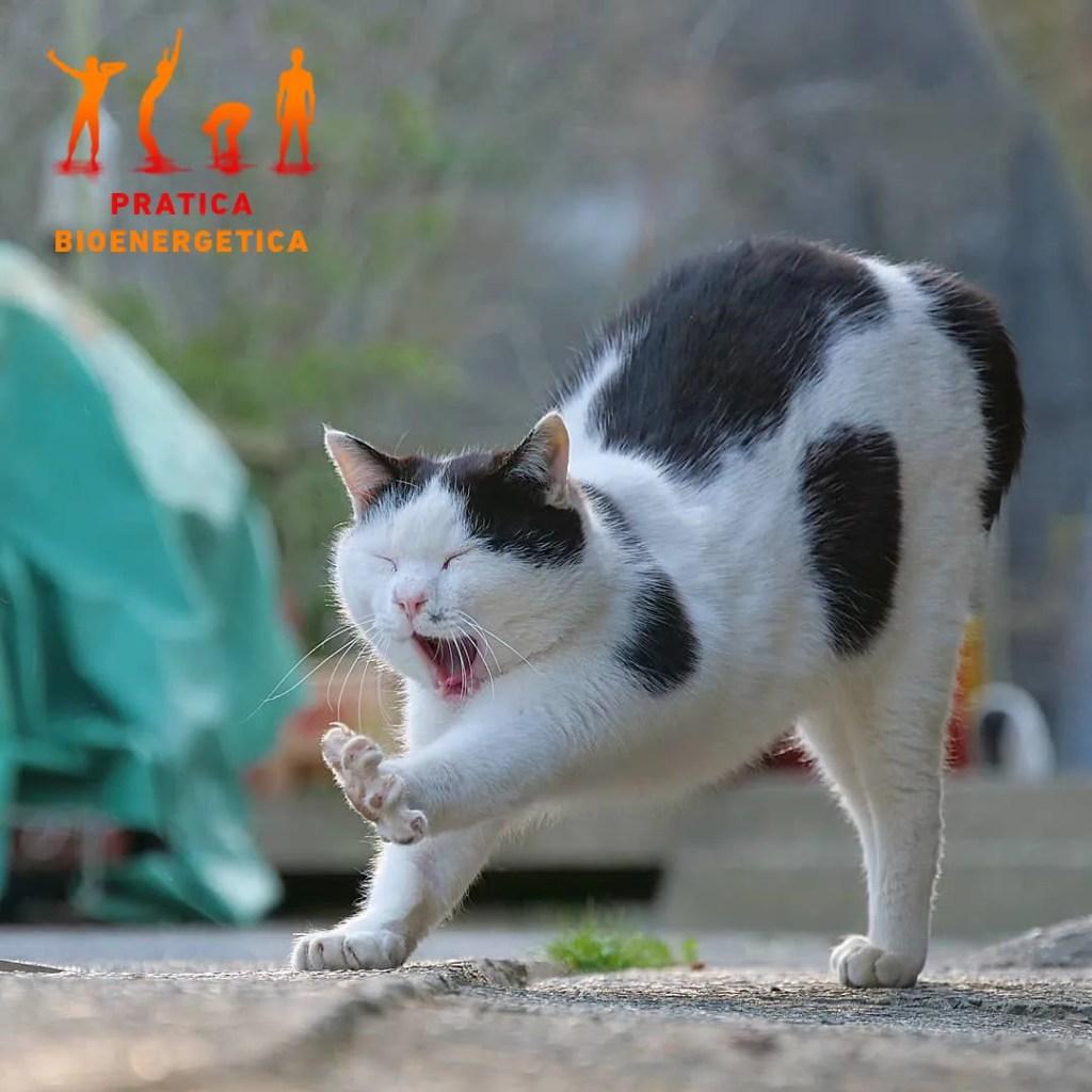 Sbadiglio-contagioso-gatto2-pratica-bioenergetica