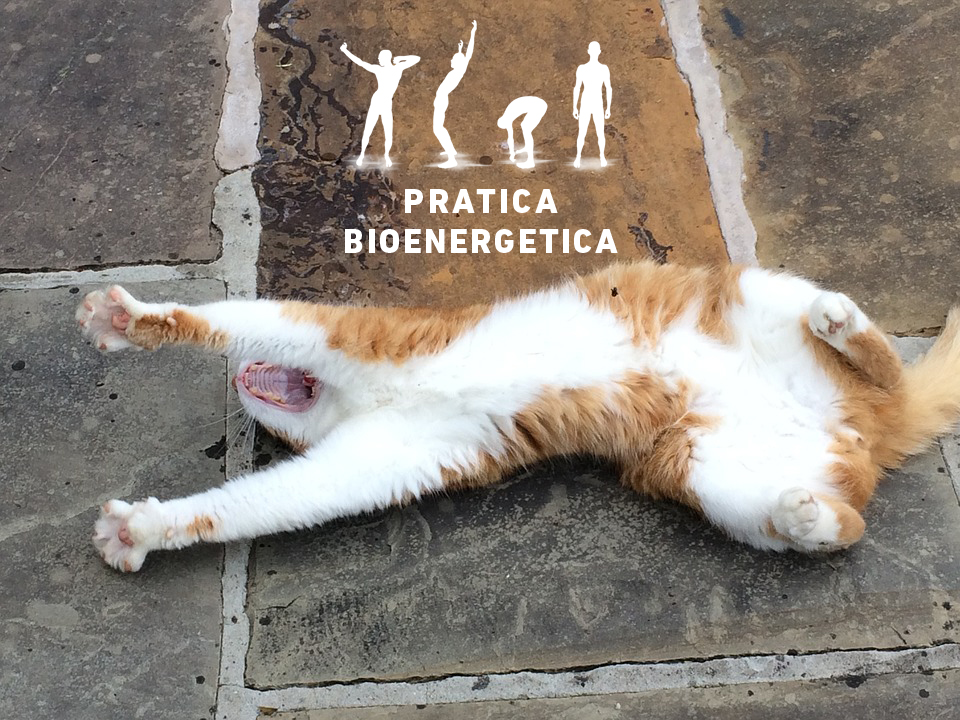 Sbadiglio-contagioso-gatto3-pratica-bioenergetica
