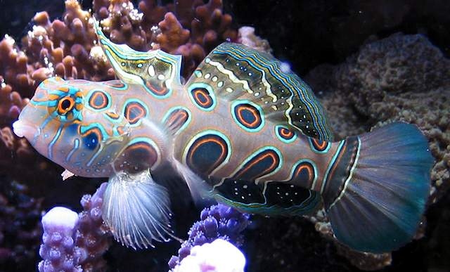 World's most beautiful and rare fishes (2/6)