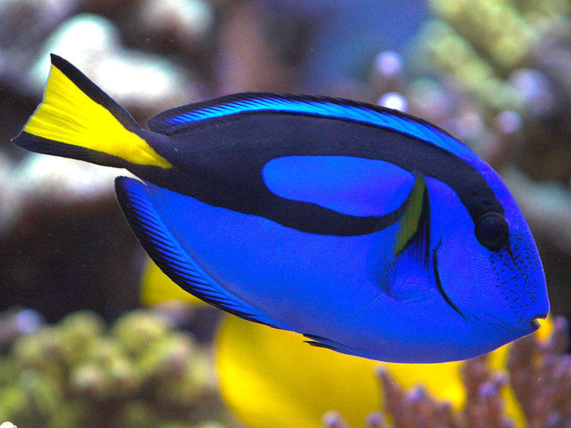 World's most beautiful and rare fishes (5/6)