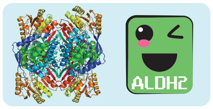 Enzima Aldeído Desidrogenase ALDH2 por PratoFundo.com