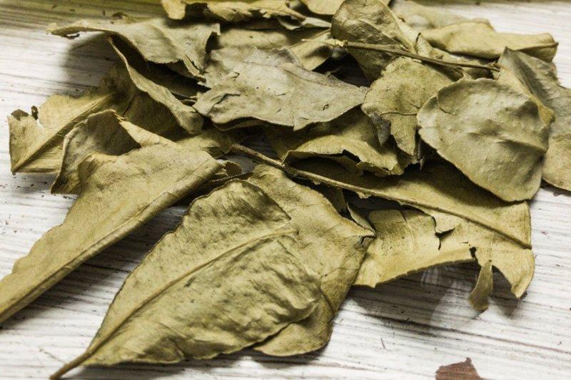folha de limão kaffir seca