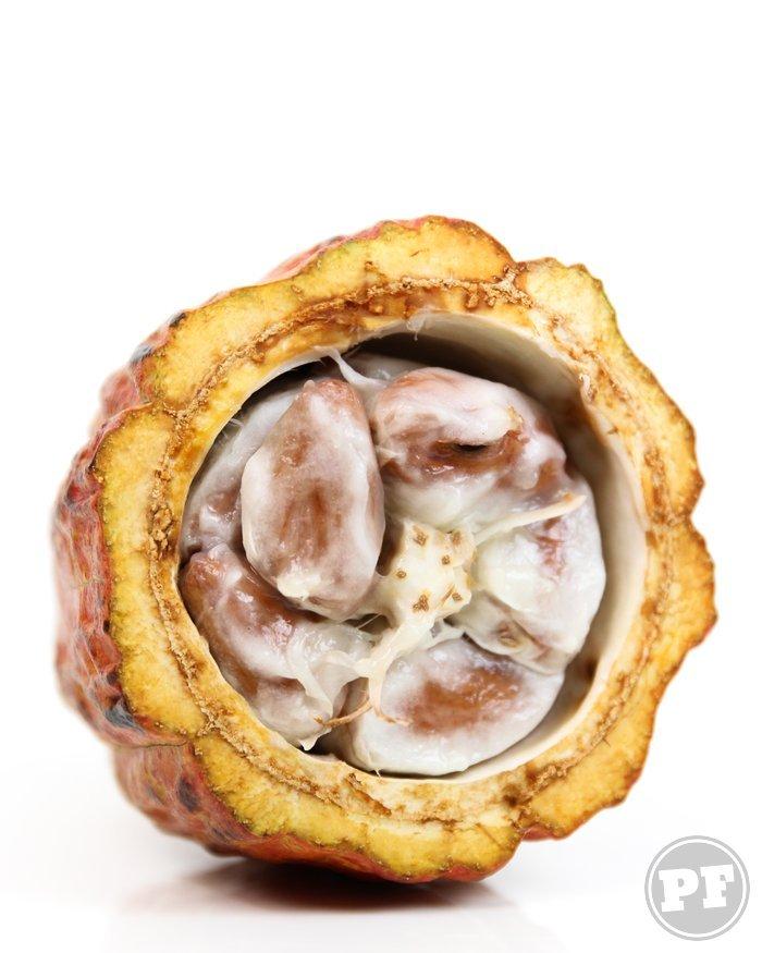Cacau Fresco (Fresh Cocoa Pod) por PratoFundo.com