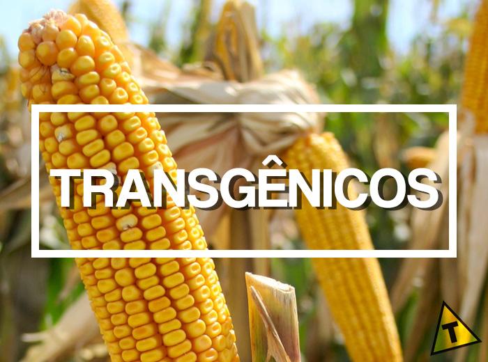 Transgênicos: Milho