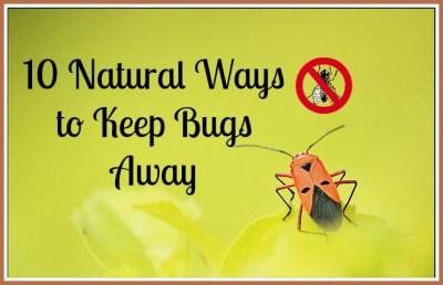 Natural Ways to Keep Bugs Away