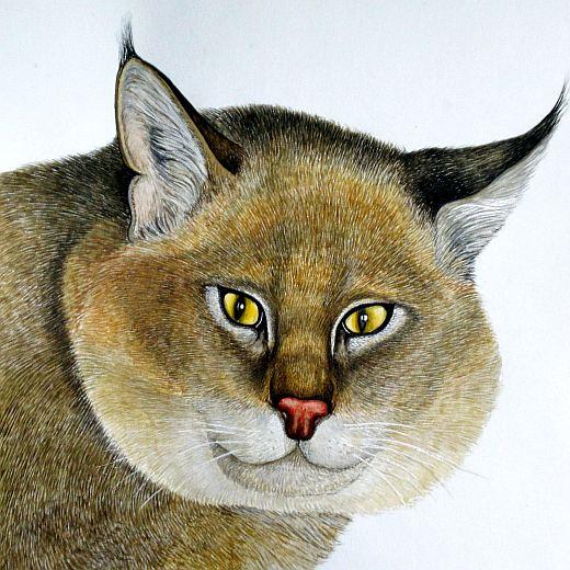 Виды лесных котов и интересные факты о них