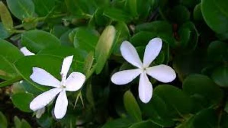 planta1
