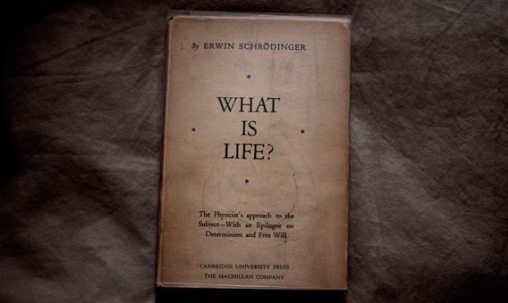 que es la vida (1)