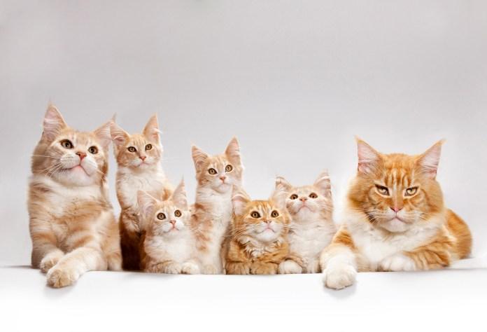 gatos15