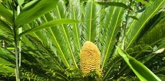 planta destacada