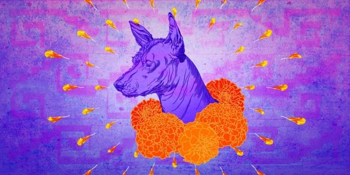 xoloitzcuintle perro