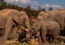 elefantes destacada