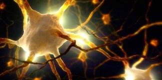 células, células humanas, células internas, Fritz Albert Popp, luminnosidad, Luz, biofotones, comunicación celular, emisiones biofotónicas, Alemania, Ciencia