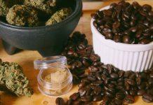 cannabis, cafe, como interactuan el cafe y cannabis, investigaciones del cafe y marihuana juntos, que efectos producen el cafe y marihuana juntos, Coffesho amsterdam