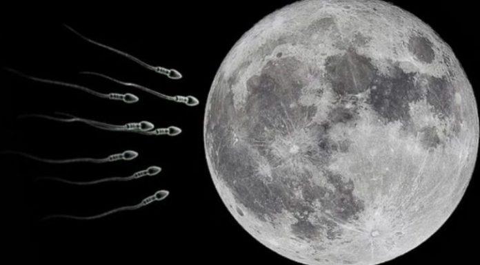 muestras esperma luna, enviaran muestras de esperma, luna, mision espacial, misiones espaciles 2021, muestras de esperma, enviar muestras de esperma, seguro global, repoblar la tierra,