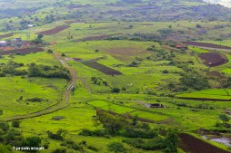road through the greenery