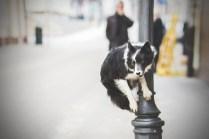 przydatne-komendy-fotografowanie-psow-blog-psach-07