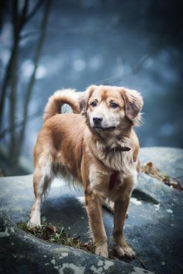 przydatne-komendy-fotografowanie-psow-blog-psach-11