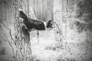 przydatne-komendy-fotografowanie-psow-blog-psach-17