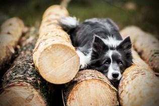 przydatne-komendy-fotografowanie-psow-blog-psach-18