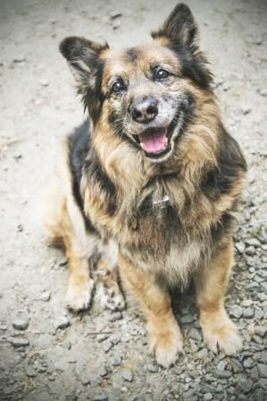 przydatne-komendy-fotografowanie-psow-blog-psach-37