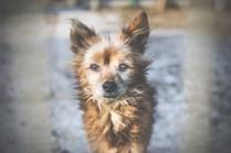 przydatne-komendy-fotografowanie-psow-blog-psach-38