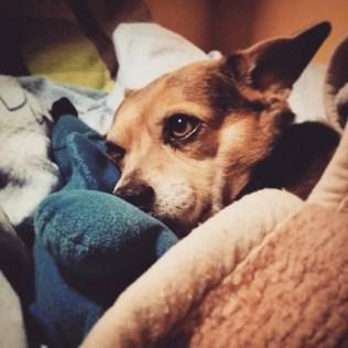 przydatne-komendy-fotografowanie-psow-blog-psach-39