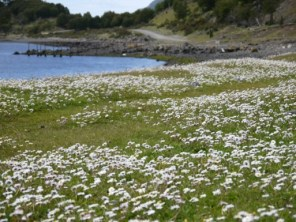 Couldn´t resist taking a picture of the daisy-filled bay where we stopped for lunch