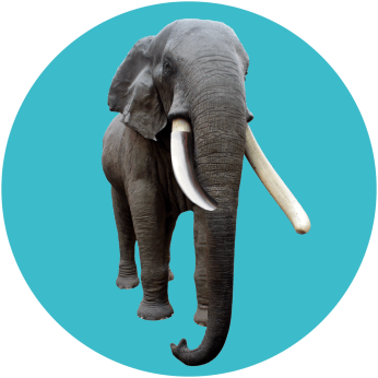 vorlage-elefant-behal
