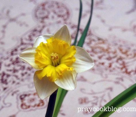 My Daffodil
