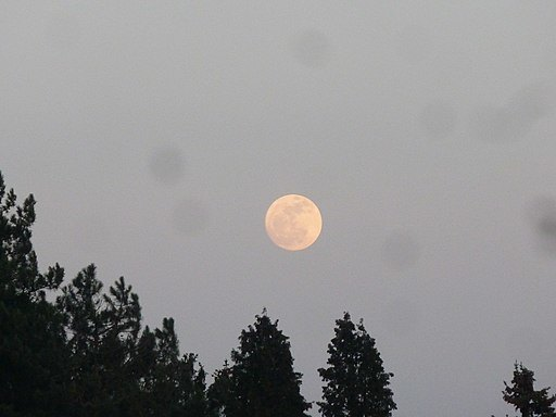 Moon When the Plums are Scarlet