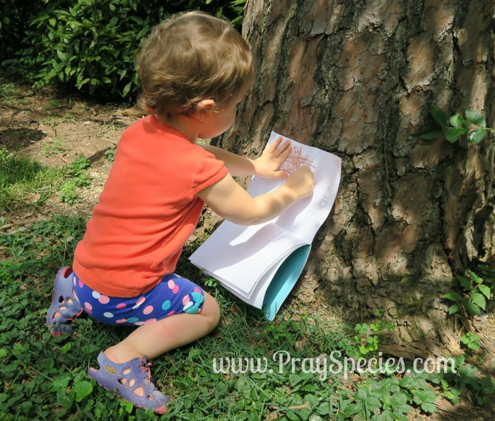 making bark rubbings for my nature journal