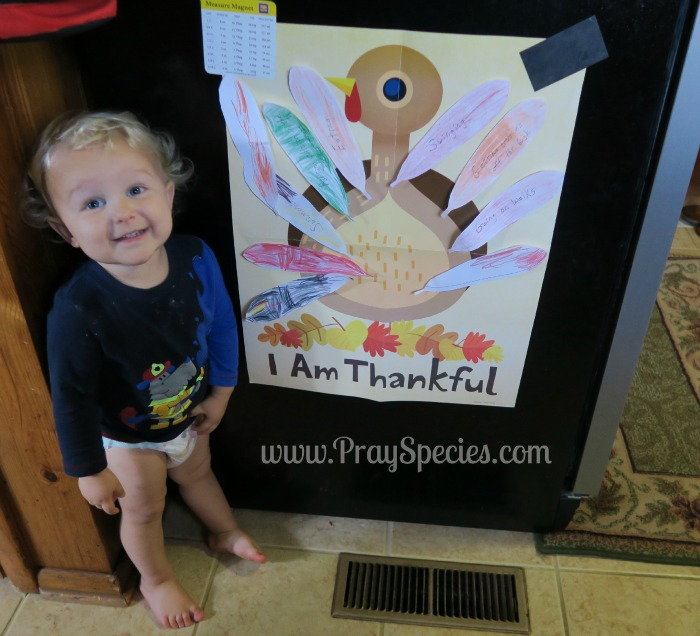 Owl is thankful turkey