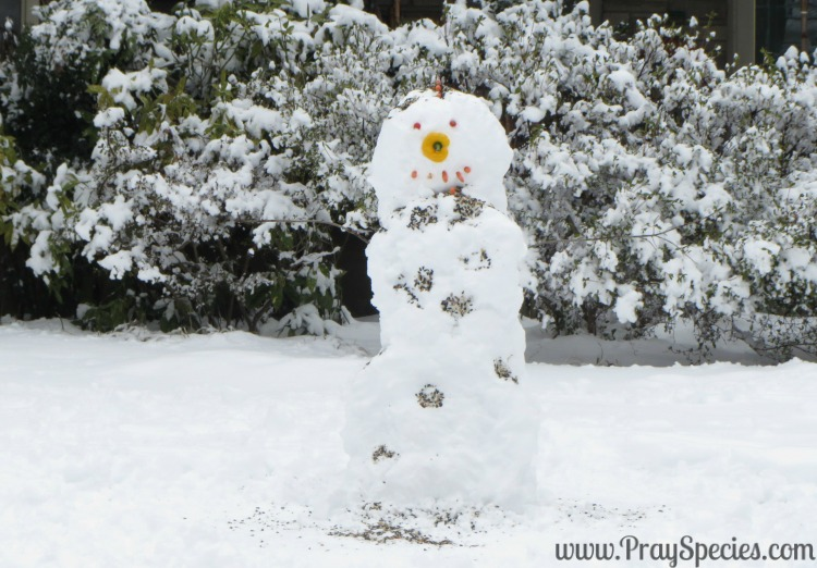 The Finished Snowman for Stranger in the Woods