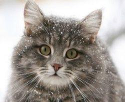 день кошек в россии 1 марта